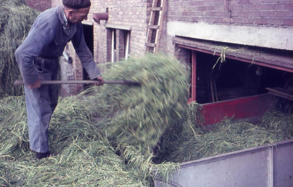 De heer Jan Tibbesma gooit het gras in de voorbak van de drogerij. Foto afkomstig uit het boekje 'Opeinde in oude foto's' (2007).